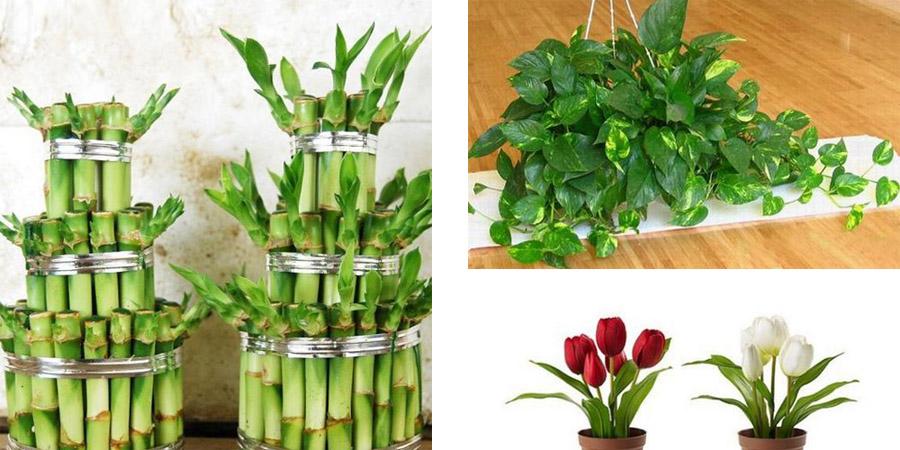 室内植物摆放.jpg